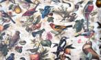 Papel Pájaros Vintage (30 x 30)