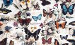 Papel Mariposas Vintage (30 x 30)