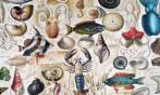Papel Animales Marinos (30 x 30)